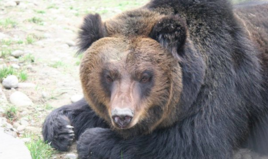 Bear Tortured For Years By His Former Owners Is Finally Free