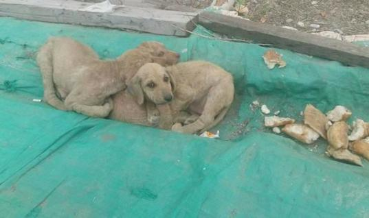 When Rescuers Found These Dogs Hugging They Were Stunned