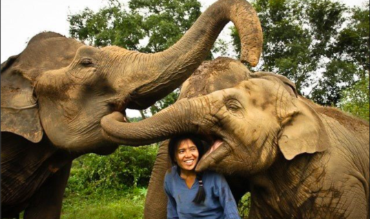 Woman Is Singing To A Sleepy Elephant, You Won't Believe Her Reaction