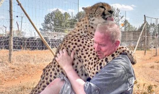 Rescued Cheetah Sends Everyone Into Tears After Seeing His 'Adoptive Dad'