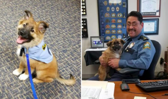 Police Hire Adorable Rescue Puppy For The Cutest Reason