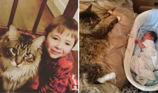 The Largest Cat In The World Has The Cutest Bond With His Human Brother