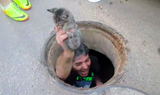 Man Hears Sounds Coming From A Storm Drain, Takes A Look And Gasps At Discovery
