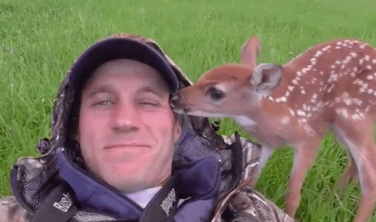 Baby Deer Refuses To Leave Her Rescuer's Side