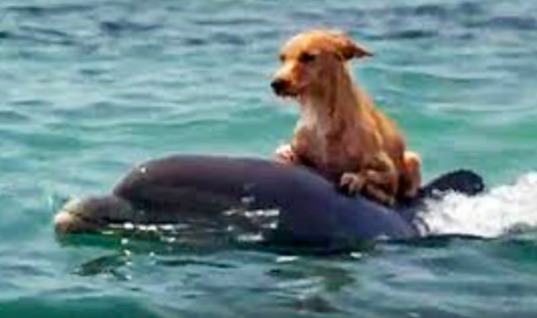 Dog Falls Into A Canal And Starts To Drown, Until Group Of Dolphins Saves Him In Incredible Manner