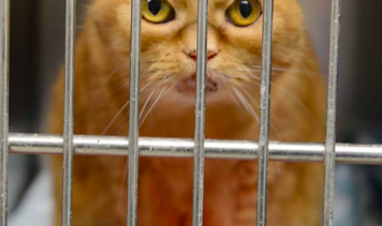 When You Hear Why Nobody Wants This Poor Abandoned Cat You'll Scream