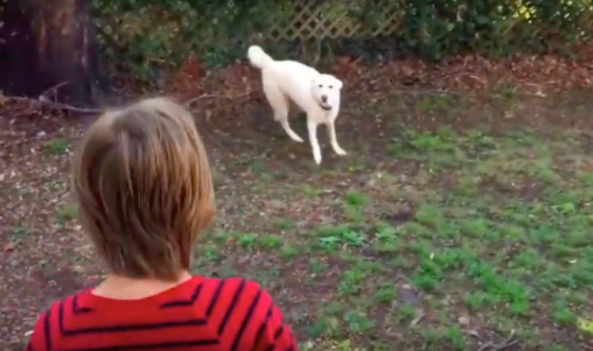 Shy Dog Is Reunited With His Best Friend. After Hearing His Voice, This Happens