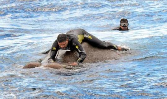 Sailors Entered Deep Waters To Save Elephant – They Had No Idea What They Were Getting Into