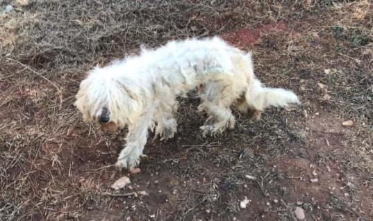 Woman Finds Neglected Puppy, What Happens Next Is Amazing