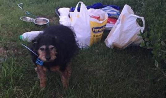 Senior Terrier Was Abandoned In A Field With A Note, But When This Man Found Her…