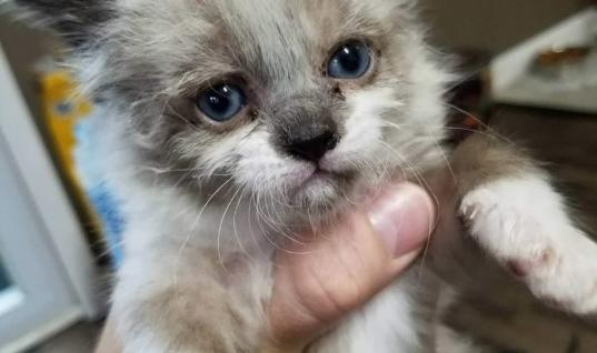 Man Adopts Tiny Kitten That He Found In His Yard, A Few Months Later This Happens