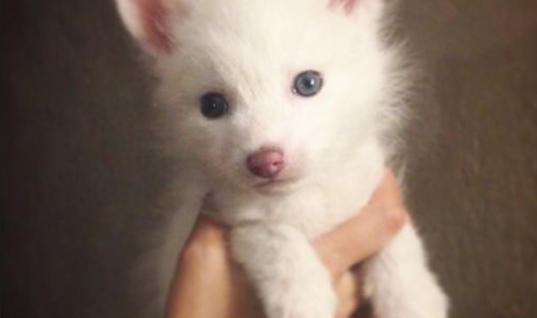 Woman Raises Puppy For Over A Year, Turns Out To Be Something Else