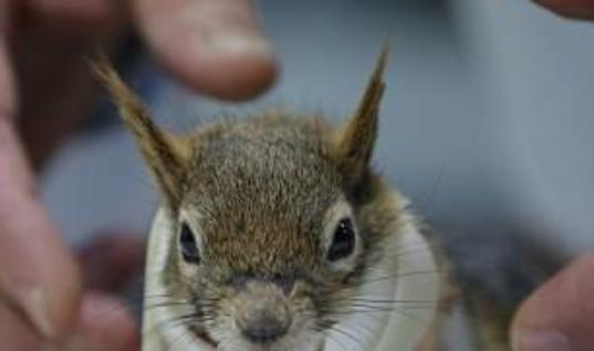 Turkish Squirrel Karamel Becomes The Hottest Critter On Two Wheels