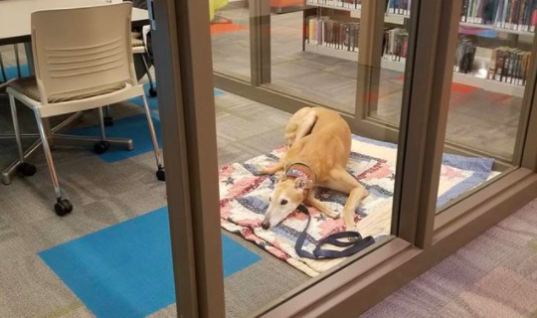 Dog Showed Up For Story Time At Library, But Nobody Came To Read To Him
