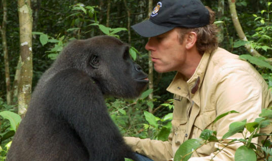 Man Raises Baby Gorilla, Five Years After Being Separated This Happens