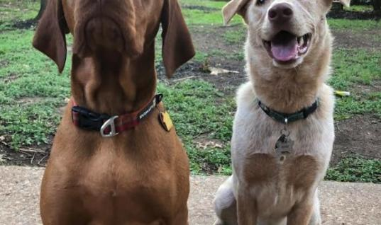 Dog Soulmates Can't Stand Being Separated So Owner Does This Amazing Thing