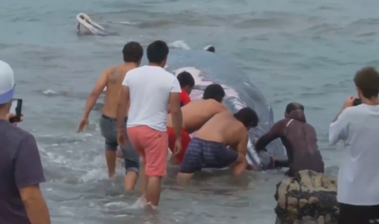 Fisherman Sees Whale Approaching The Shore, Then He Notices Something Strange