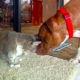 This Dog Saved A Cat From A Coyote Attack, Now They're Inseparable