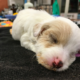 Abandoned Puppy Makes Miraculous Recovery After Woman Finds Her In A Park