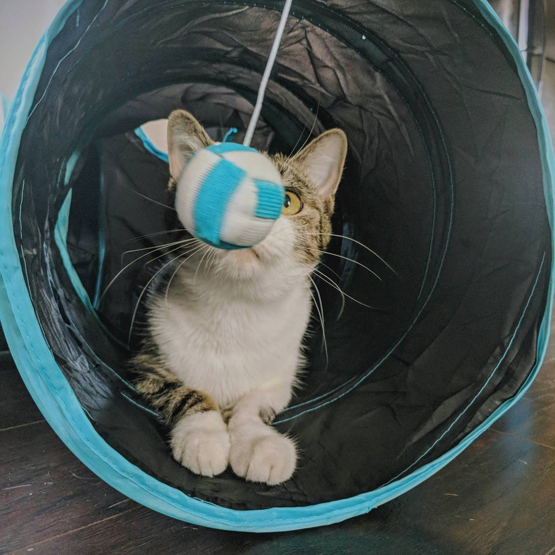 nyan cat flying