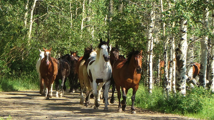 herd of horses running on forest